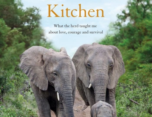 How DID the elephants we adopted know my husband had suddenly died?